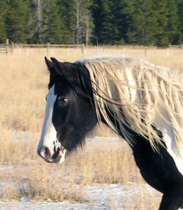 http://www.bigskygypsy.com/images/11-08-Tara-head-web.jpg